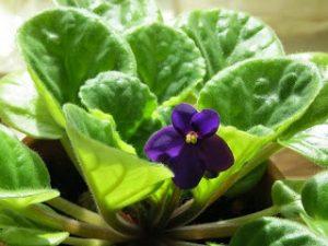 Kako kućno bilje djeluje na zdravlje